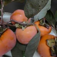 柿代さんは今年も美味かった! にっこりしてね、にっこり梨☆ 味覚の秋? 冬??