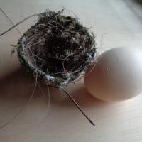 メジロの巣