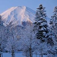 身近な雪景色
