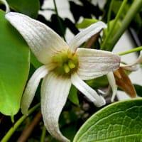 庭の花木(4月-2)ブルーベリーの花いっぱい、ニワザクラ、ヤマブキ、メギ、他