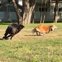 追う犬追われる犬