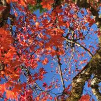 先日の日光の紅葉です。