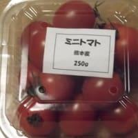 熊本産 ミニトマト
