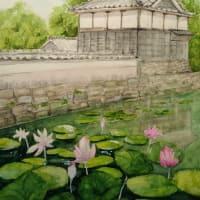 本證寺の蓮 2 水彩画