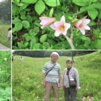 福島県南会津を旅して、ヒメサユリを堪能する。-2