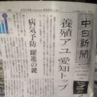 愛知県の養殖アユ 全国一位