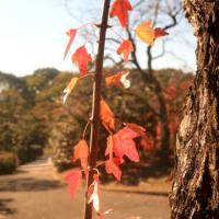 名残の秋Ⅳ