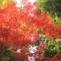 ブラ散歩~東京大学本郷キャンパス 銀杏並木