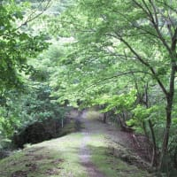 五月の高宕山トレイルラン  1563