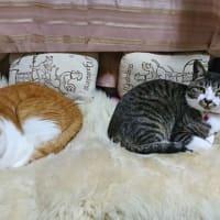 7月4日(土) ~猫の麦とごまの日常日記~
