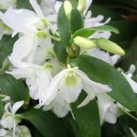 エンジェルベイビー・ラブポケットの花は