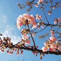 春よ、来い!