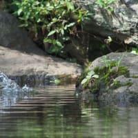 「水浴び翡翠」で見るプロキャプチャーの分解能