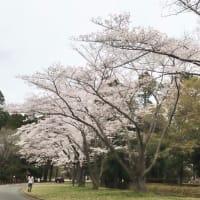 春 メガネ