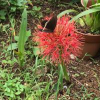 台風で散る前に、、Flower