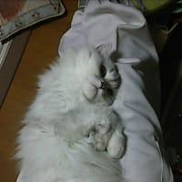 甘えん坊の猫でした