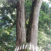 境内に縄文時代の住居跡 代々木八幡宮
