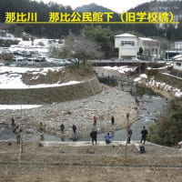 長良川上流郡上漁協の2020年アマゴ成魚放流!