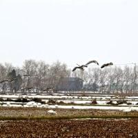 畑の中の渡り鳥