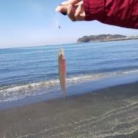 サーフと堤防でのシロギス 〜船形&築港〜