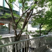 お茶会@新宿「家の話をしましょう」:参加された方の感想