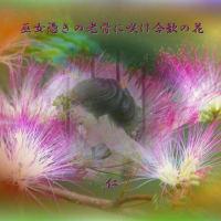 フォト575あそび『 巫女憑きの老骨に咲け合歓の花 』yws2102