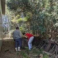 シイタケの原木