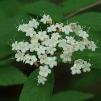 六甲登山道で見かけた花