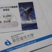 【★開催報告★】わちゃっとVol.12「研究者を海へと駆り立てるクジラの謎」