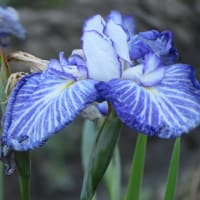 散歩道の朝花―㉜