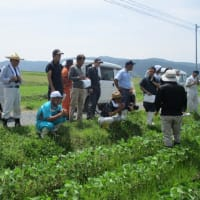 大豆の現地検討会の開催
