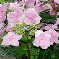 母の日プレゼントの花4