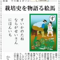 スイカのタネ 奈良が生産日本一/毎日新聞「かるたで知るなら」第16回
