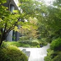 心地よい緑の空間が広がる~堂島の杜~(2)
