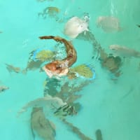 室戸廃校水族館へGO♫