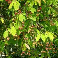 散歩道の植物(夏から秋へ)~国道352の歩道(1)