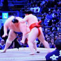 11/15 相撲 炎鵬  tolera is appearing now