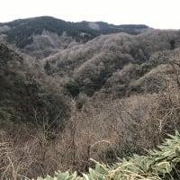 ブラオイラ#354(続・倶利伽羅峠地獄谷死闘編)