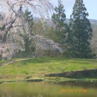 正教山登山と与一野のしだれ桜(3) 下山後 与一野のしだれ桜