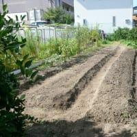 8月23日 農園作業日