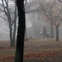 凄い霧が(1月24日版)