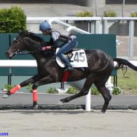 【HBAトレーニングセール2020(5/12開催)】の上場馬申込受付スタート!