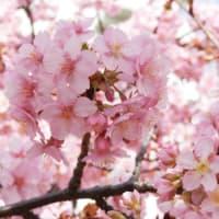 ご近所の春