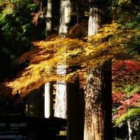 古代の森の紅葉