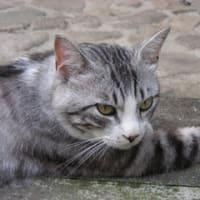最近の、我が家の猫事情