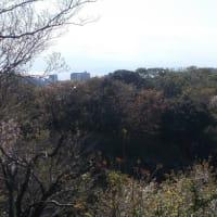 コロナに負けずに鎌倉を歩く;深沢・夫婦池公園・鎌倉山・広町緑地周遊(2)