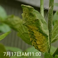 孵化した蝶