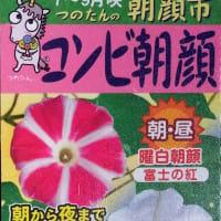 9・10月のユウガオ日記(9/21、9/23花が咲く~10/4)