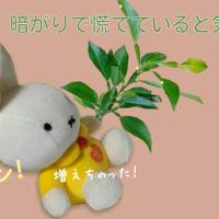 2019 6/24日(月)の例話日記