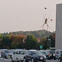 巨大蜘蛛あらわる